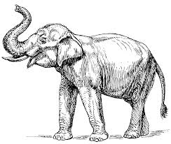 sketch of an elephant drawing pics