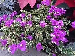 maryland pegplant