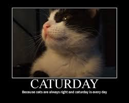 Caturday Meme - caturday know your meme