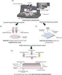 direct 3d cell printing of human skin with functional transwell