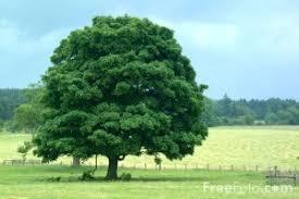 special tree