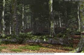 fagus sylvatica artstation fagus sylvatica or grandifolia forest beech tree