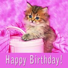 fluffy cat on pink happy birthday