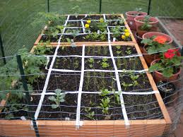 Square Foot Square Foot Gardening Update 1