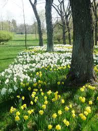 greeting barn linden hill gardens u0026 jerry fritz garden design