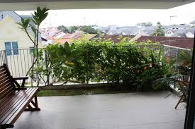 privacy plants for balcony things you need to understand about