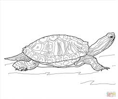 spectacular coloring pages turtle wallpapers outstanding