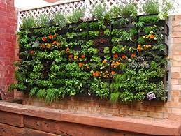 best of backyard vegetable garden ideas pbxfqi1i