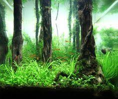 2011 aga aquascaping contest entry 194 aquascaping