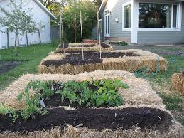lettingitgrow finding a balance between cultivating and