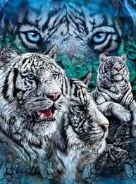 amazon com 9 white tigers throw blanket decorative fleece
