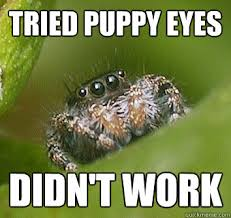 Puppy Eyes Meme - tried puppy eyes didn t work misunderstood spider quickmeme