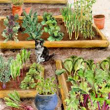 starting a small vegetable garden how to create small vegetable