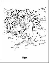 excellent tiger coloring pages printables with tiger