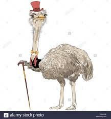 sketch closeup portrait of funny ostrich bird hipster in red top