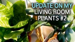 update on my living room plants 2 youtube