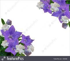 Gardenias by Illustration Of Floral Border Purple Flowers And Gardenias