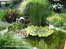 Types Of Fish For Garden Ponds - 17 beautiful backyard pond ideas for all budgets empress of dirt