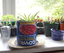 how to make an indoor garden 6 steps
