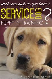 199 best service dog training images on pinterest service dogs