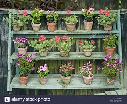 ornamental plant display shelving stand with pelargoniums hanging
