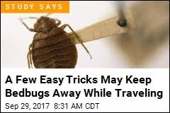 Bean Leaves Bed Bugs Bedbugs U2013 News Stories About Bedbugs Page 1 Newser