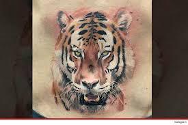 conor mcgregor tiger on me belly button tmz com