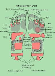 Nerve Map 31 Printable Foot Reflexology Charts U0026 Maps Template Lab