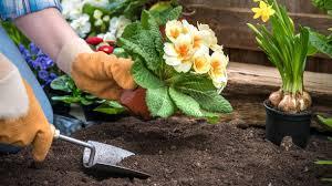 pflanzen fã r den balkon blumenerde die richtige erde für garten und balkon finden