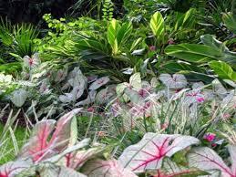 Tropical Plants For Garden - make shade garden with tropical plants interior design ideas