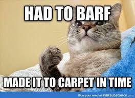 Bad Kitty Meme - crystal clean carpet grand haven bad kitty on the carpet