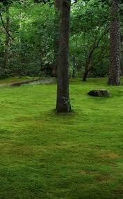 how to grow moss this site pulls together many posts from this