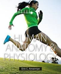Fundamentals Of Anatomy And Physiology Third Edition Study Guide Answers Human Anatomy And Physiology By Erin C Amerman 2014 Hardcover
