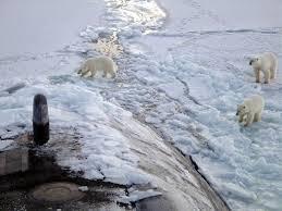 polar bear wikipedia