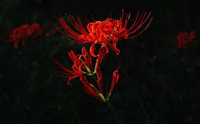 spooky pixel background 7552 red flower on dark background wallpapers download 2560x1600
