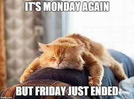 Monday Cat Meme - monday cat imgflip