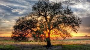 lone tree on the field hd wallpaper 1701513