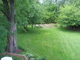 Landscaping Ideas For Backyard With Dogs by Garden Design Garden Design With Landscaping Ideas For Backyard