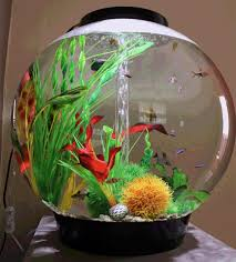 Fish Bowl Decorations Fish Bowl Decorations Google Search Reference For Fish Bowl