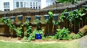Hanging Vegetable Gardens by Jason U0027s Upside Down Garden 09 10 Youtube