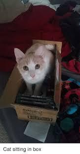 Cat Sitting Meme - cat sitting in box cat meme on me me