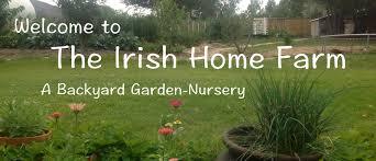 the irish home farm the irish home farm a backyard garden