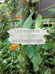 nice backyard herbs part 4 raised bed herb garden like to do a