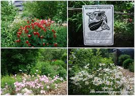 plants native to kansas plants catherine sherman