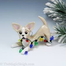 256 best chihuahuas style images on