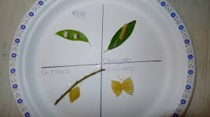 butterfly life cycle for kids craft