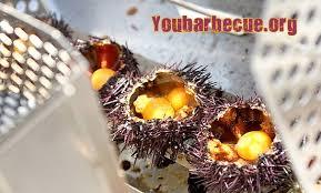 comment cuisiner des oursins recette d oursins au barbecue you barbecue org