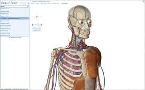 Human Anatomy Images Free Download Science Visible Body 3d Human Anatomy Atlas Free Download For Pc