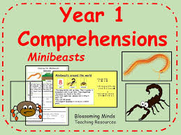 year 1 comprehension pack minibeasts rainforests and reptiles