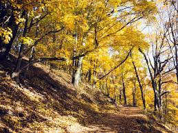free picture forest wood road mountain nature autumn color